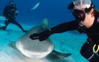 Акулы в Таиланде: где обитают и опасны ли они для отдыхающих?